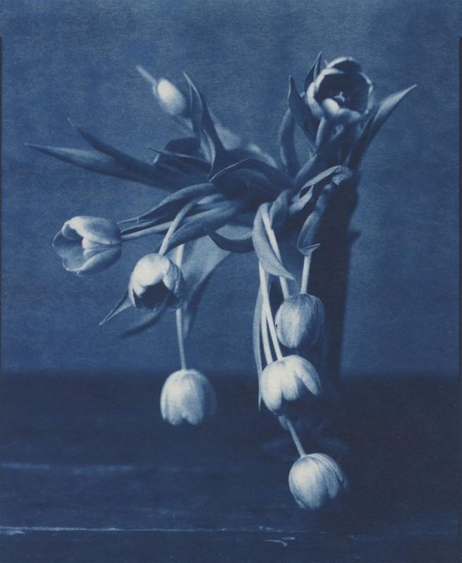 John Dugdale. 'Mourning Tulips' 1999