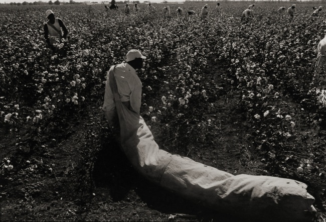 Danny Lyon. 'Convict With a Bag of Cotton, Texas' 1968