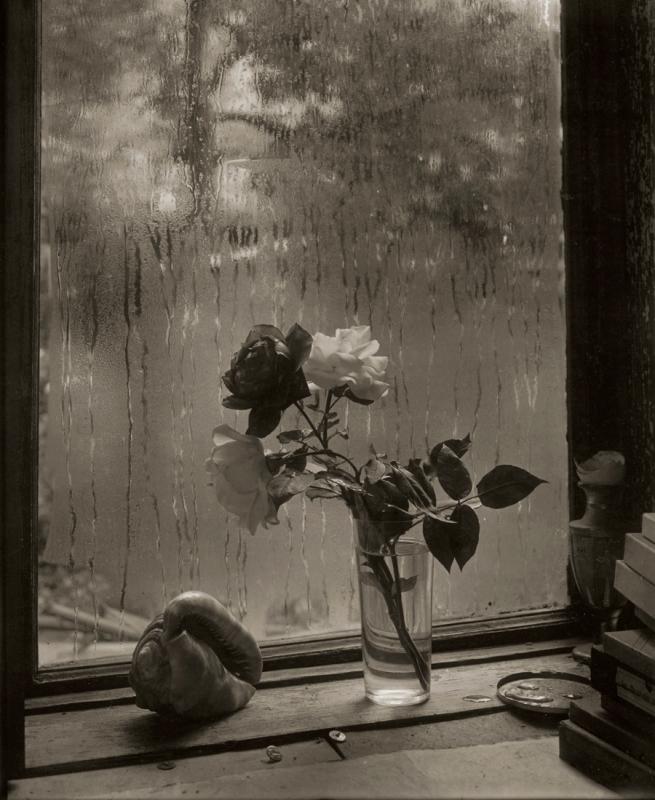 Josef Sudek. 'La Dernière Rose' 1956