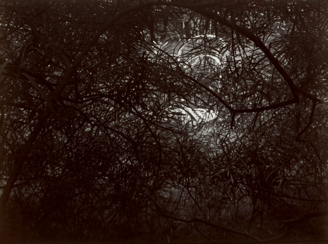 Josef Sudek. 'Le Jardin de Rothmayer' 1954-1959