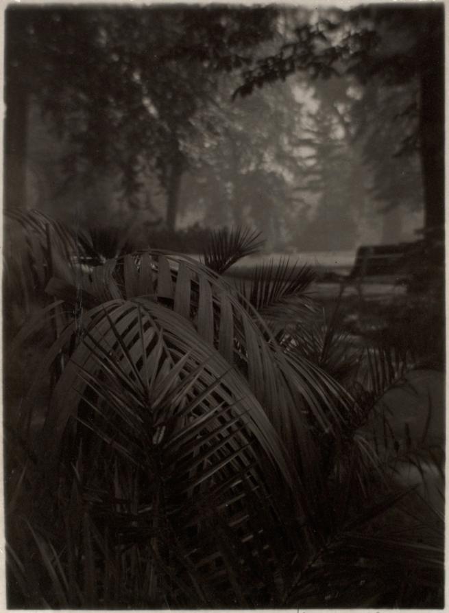 Josef Sudek. 'Le Jardin Royal' c. 1940–1946