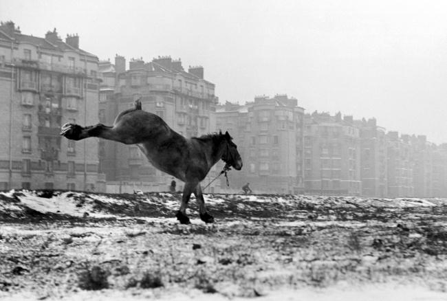 Sabine Weiss. 'Cheval, Porte de Vanves' Paris, 1952