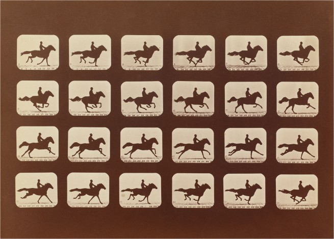 Eadweard Muybridge. 'Horses. Running. Phyrne L. No. 40, from The Attitudes of Animals in Motion' 1879