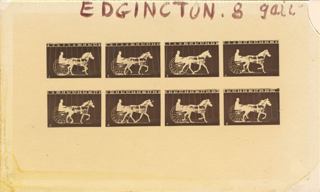 Eadweard Muybridge. 'Internegative for Horses. Trotting. Abe Edgington. No. 28, from The Attitudes of Animals in Motion' 1878