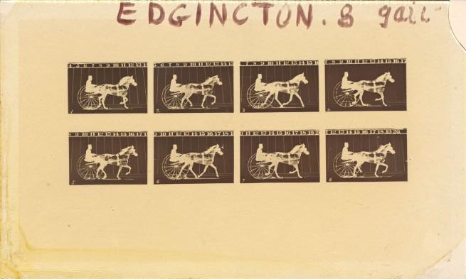 Eadweard Muybridge. 'Internegative for Horses. Trotting. Abe Edgington. No. 28, from The Attitudes of Animals in Motion' 1878