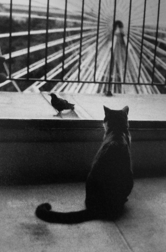 Henri Cartier-Bresson. 'An Attentive Cat' 1953