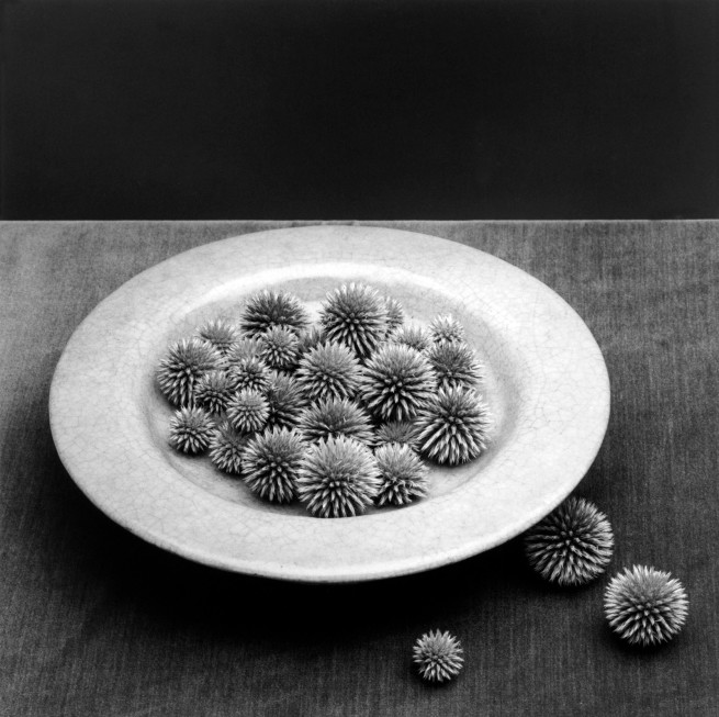 Robert Mapplethorpe. 'Pods' 1985