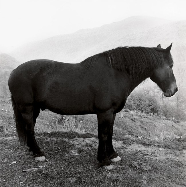 Peter Hujar. 'Horse in West Virginia Mountains' 1969