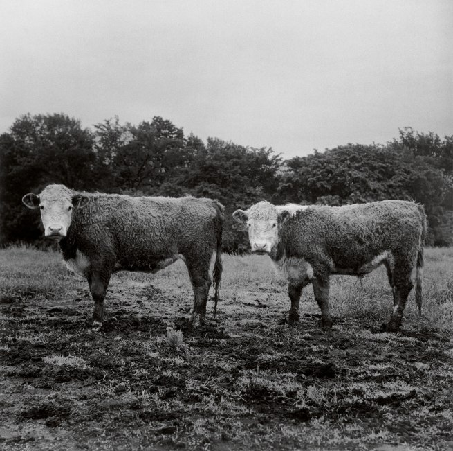 Peter Hujar. 'Butch and Buster' 1978