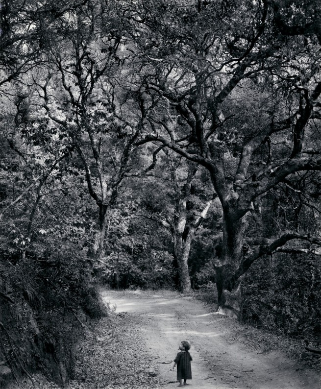 Wynn Bullock (American, 1902-1975) 'Child on Forest Road' 1958, printed 1973