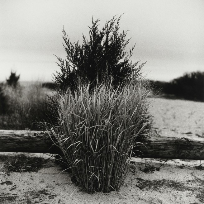Peter Hujar. 'Grass, Port Jefferson, New York' 1984