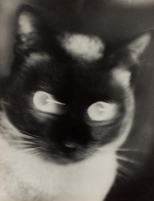 """Otto Umbehr. """"Katz"""" - Cat 1927"""