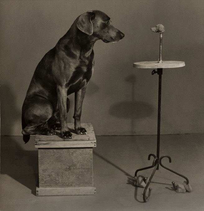 William Wegman (American, born 1943) 'Contemplating the Bust of Man Ray from the portfolio Man Ray' 1976