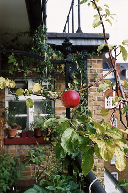 Wolfgang Tillmans (German, born 1968) 'Apple tree' 2007