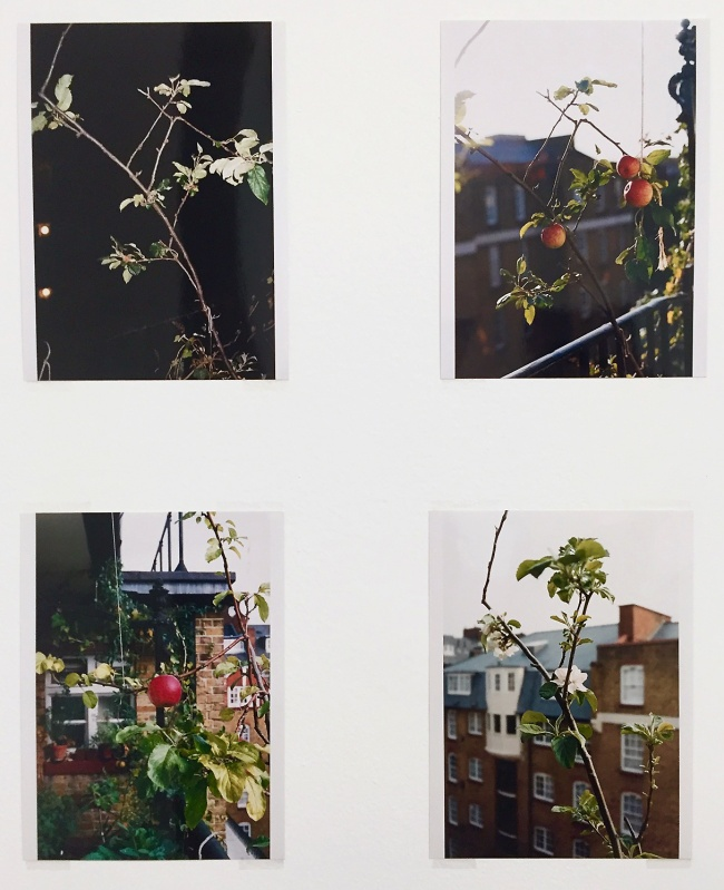 Wolfgang Tillmans (German, born 1968) 'Apple tree' Various dates