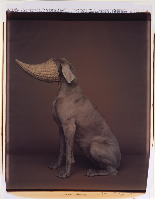 William Wegman (born United States 1943) 'Horned hound' 1991