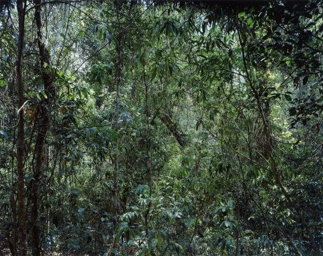 Thomas Struth (*1954) 'Paradiese 09' 1999