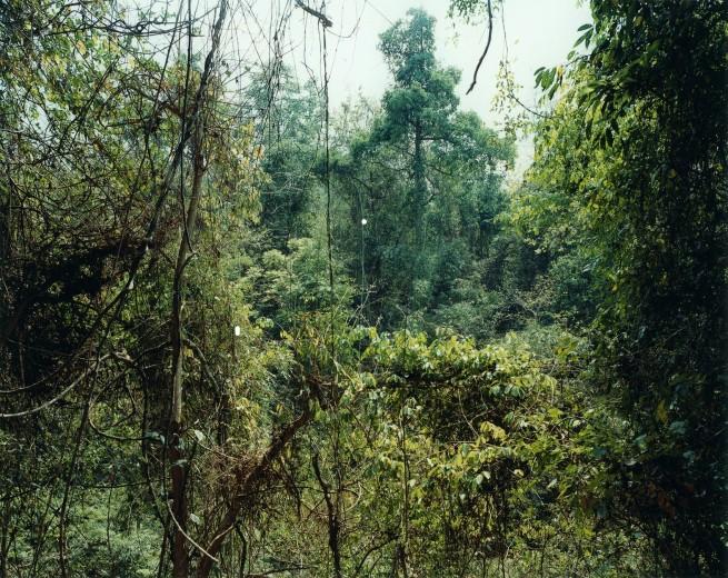 Thomas Struth(born 1954) 'Paradise 10 (Xi Shuang Banna), Yunnan Province, China' 1999