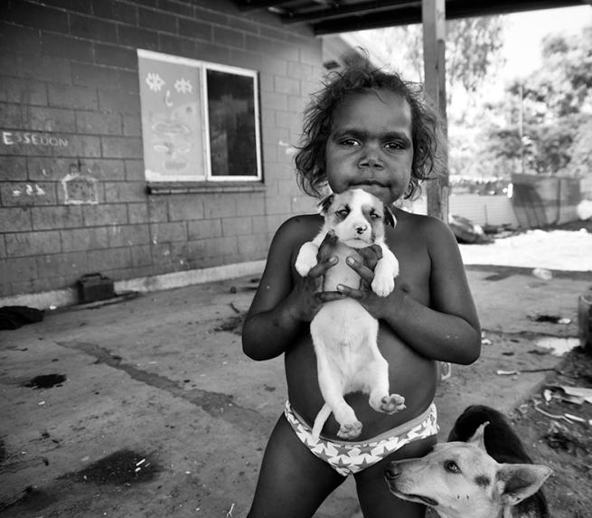 Judith Crispin. 'Tabra Nakamarra's Puppy' 2015