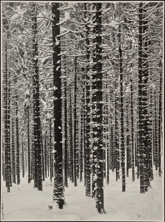 Albert Renger-Patzsch (1897-1966) 'Gebirgsforst im Winter (Fichtenwald im Winter)' [Mountain forest in winter (spruce forest in winter)] 1926