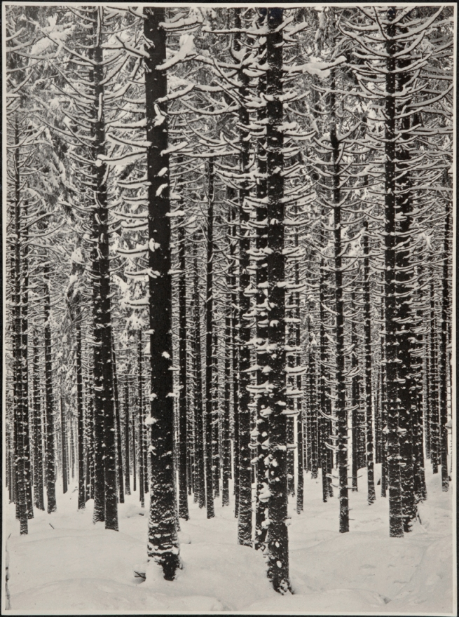 Albert Renger-Patzsch (1897-1966) 'Gebirgsforst im Winter (Fichtenwald im Winter)' [Mountain forest in winter (spruce forest in winter)] 1926
