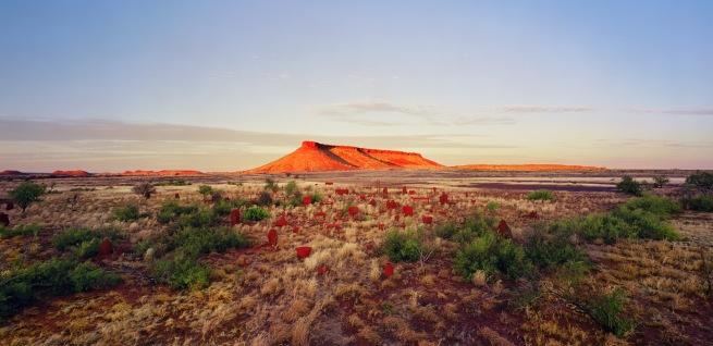 Rosemary Laing. 'brumby mound #6' 2003
