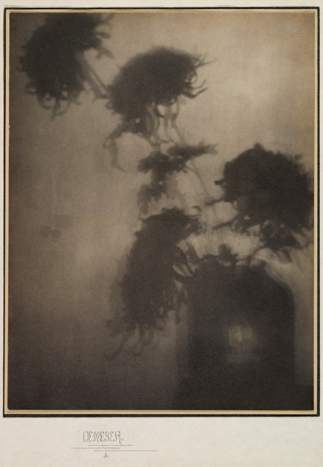Adolf de Meyer (American (born France), Paris 1868-1946 Los Angeles, California) 'The Shadows on the Wall (Chrysanthemums)' 1906