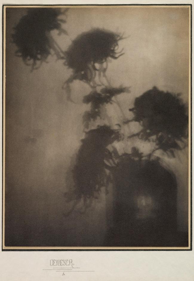 Adolf de Meyer (American (born France), Paris 1868-1946 Los Angeles, California) 'The Shadows on the Wall (Chrysanthemums)' 1906
