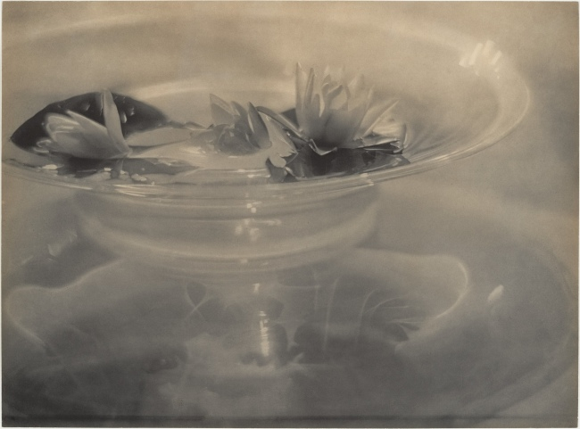 Adolf de Meyer (American (born France), Paris 1868-1946 Los Angeles, California) 'Water Lilies' c. 1906, printed 1912