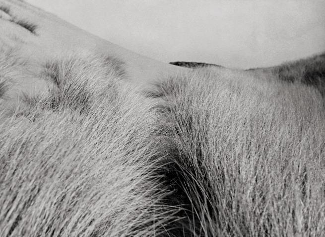 Raoul Hausmann (1886-1971) 'Untitled (Dune grass)' c. 1931