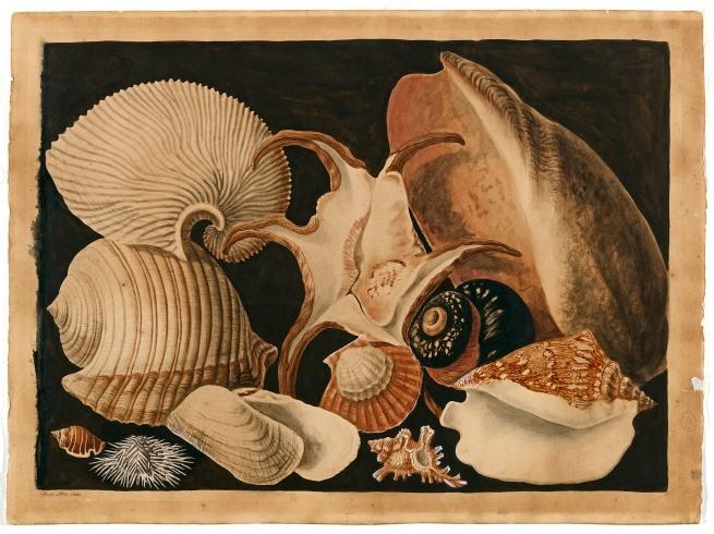 Sarah Stone. 'Shells' 1781