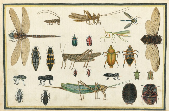 Richard Browne (illustrator) 'Insects' 1813