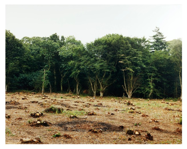 Gerhard Stromberg. 'Coppice (King's Wood)' 1994