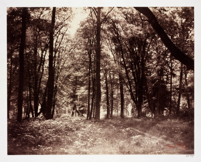 Gustave Le Gray. 'In the Forest of Fontainbleau (Bas-Bréau)' 1852