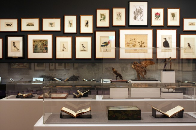 Installation views of the exhibition 'Colony: Australia 1770 - 1861' at NGV Australia at Federation Square, Melbourne