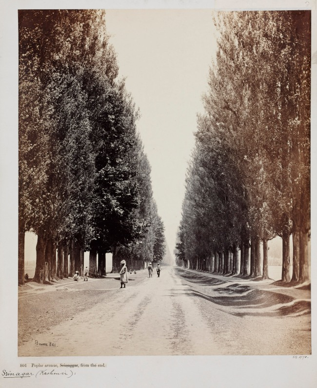 Samuel Bourne. 'Poplar Avenue, Srinuggur, Kashmir, from the end' 1864