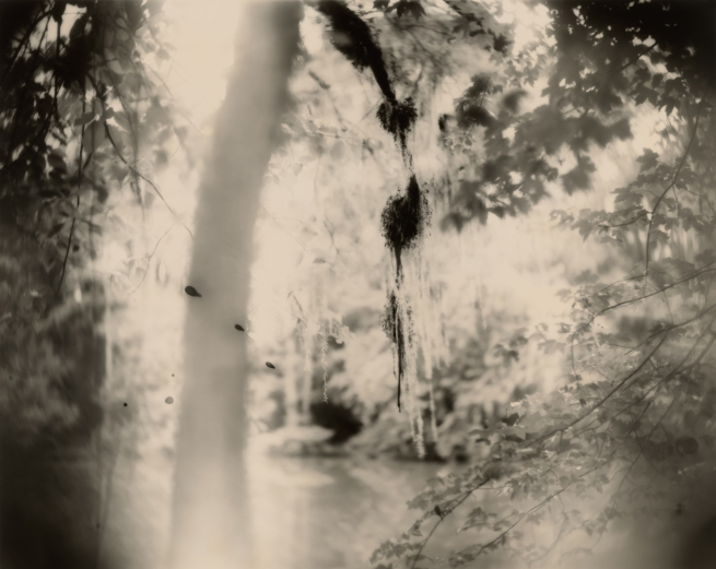Sally Mann (American, b. 1951) 'Deep South, Untitled (Three Drips)' 1998