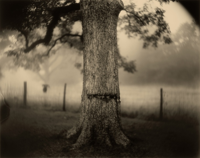 Sally Mann (American, b. 1951) 'Deep South, Untitled (Scarred Tree)' 1998