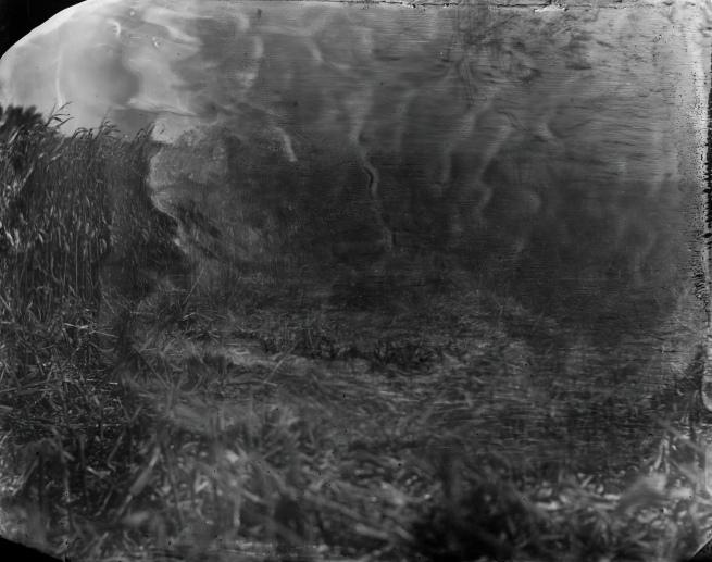 Sally Mann(American, b. 1951) 'Battlefields, Antietam (Cornfield)' 2001