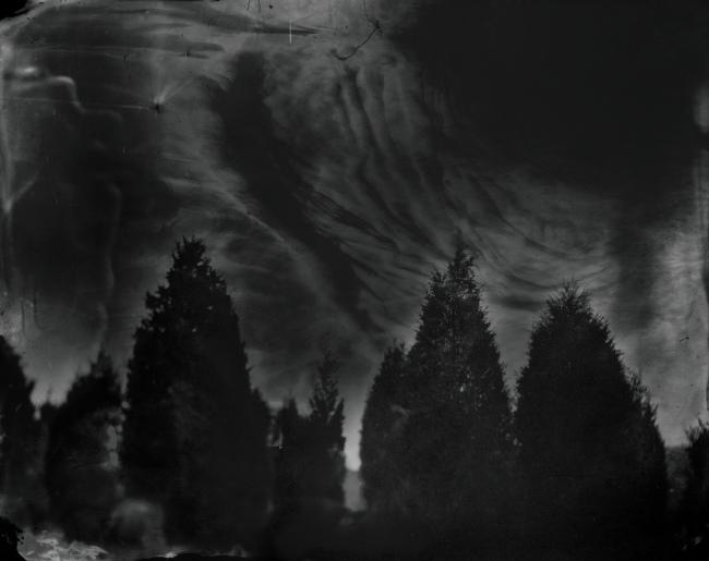Sally Mann(b. 1951) 'Battlefields, Fredericksburg (Cedar Trees)' 2001