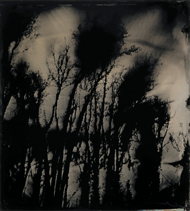 Sally Mann (American, b. 1951) 'Blackwater 20' 2008-2012