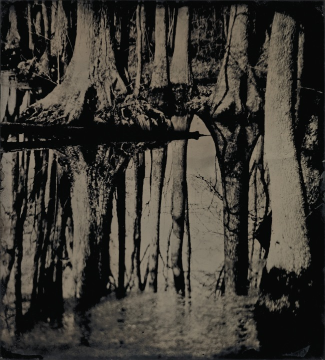 Sally Mann (American, b. 1951) 'Blackwater 25' 2008-2012