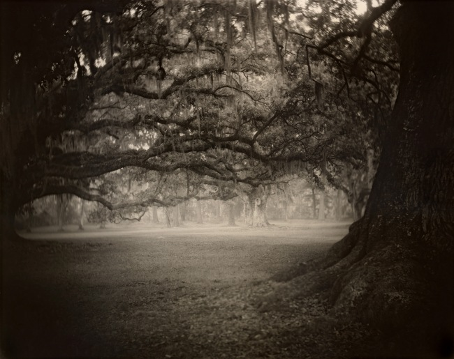 Sally Mann (b. 1951) 'Deep South, Untitled (Fontainebleau)' 1998