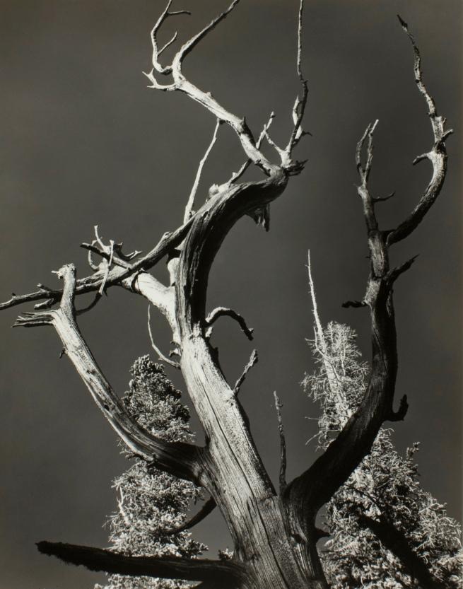 Minor White(American, 1908-1976) 'Ice Lake' 1940