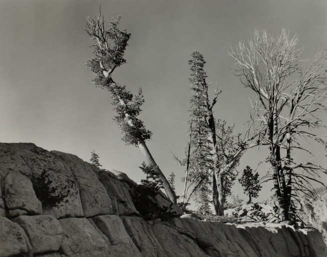 Minor White(American, 1908-1976) 'Hurricane Creek (Trees and Rock)' 1941
