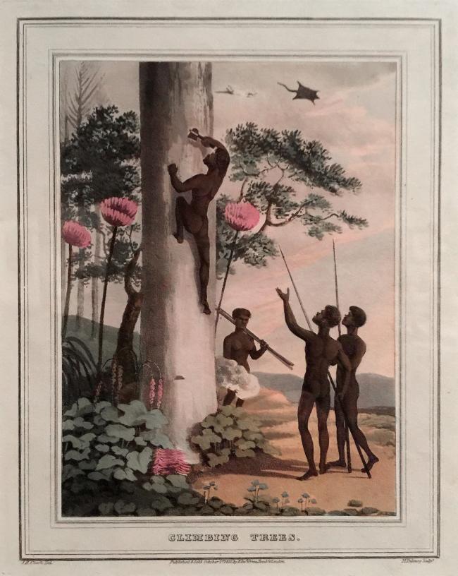John Heaviside Clark (draughtsman Scotland 1770-1863, England 1801-32) Matthew Dubourg (engraver active in England 1786-1838) 'Climbing trees' 1813 (installation view)