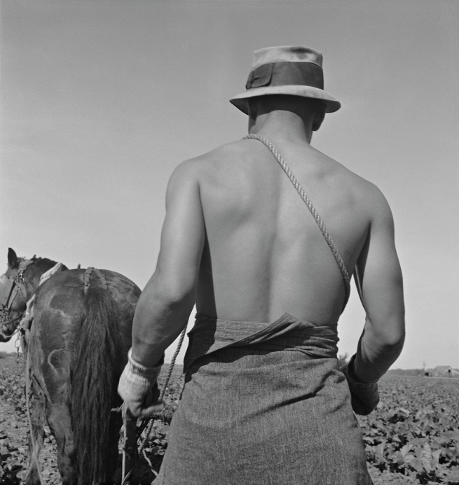 Dorothea Lange. 'Filipino Field Worker, Spring Plowing, Cauliflower Fields, Guadalupe, California' March 1937