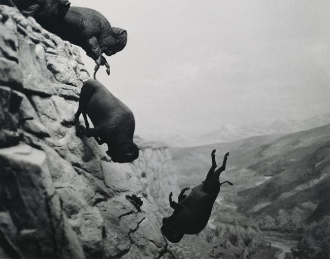 David Wojnarowicz (1954-1992) 'Untitled (Buffalo)' 1988-89
