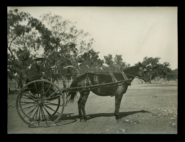 Anonymous photographer. 'Horse and trap, Wagga Wagga, New South Wales' c. 1910