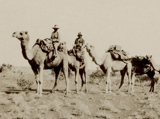 Anonymous photographer. 'Police camels' c. 1930 (detail)